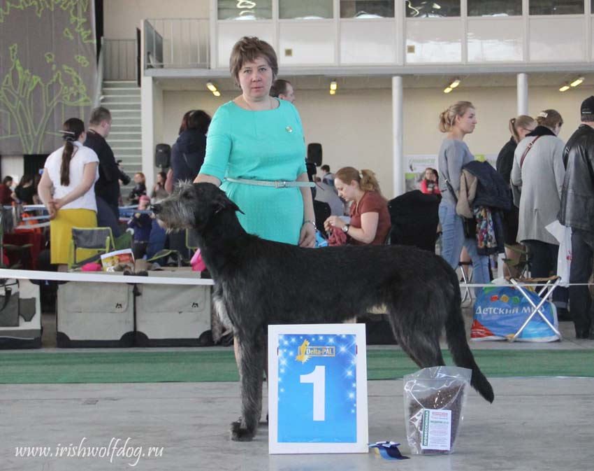 Irish Wolfhound. Kennel Tsarskaja Prihot